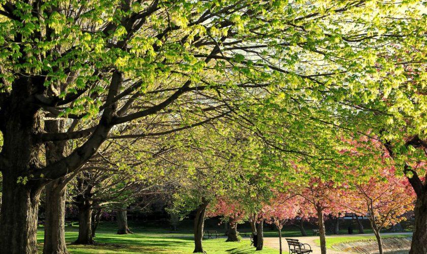 Boston's 10 friendliest parks for strollers, mapped