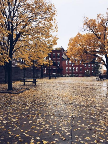 Monday's Brief: Ferry Prices, Boston Ballet Story Time, Falling Leaves