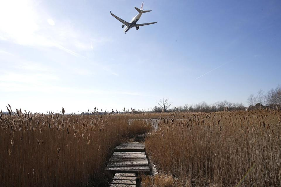 Officials seek more protections for city wetlands to counter effects of climate change