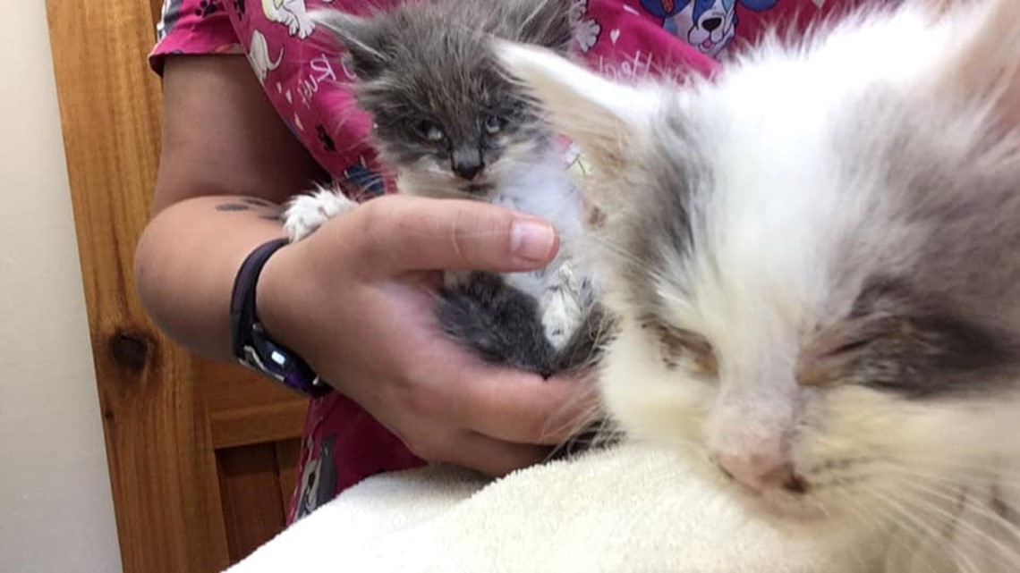 Kittens reportedly thrown from car on Boston State Road