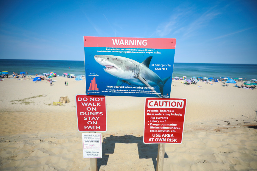 Great white shark sightings close 3 Cape Cod beaches temporarily