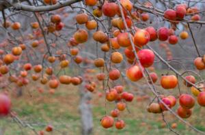best apple orchards in new england scott farm